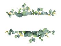 Waterverf groene bloemenbanner met de de zilveren die bladeren en takken van de dollareucalyptus op witte achtergrond worden geïs