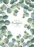 Waterverf groene bloemenkaart met de de zilveren die bladeren en takken van de dollareucalyptus op witte achtergrond worden geïso royalty-vrije illustratie