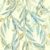 Waterverf groene olijven Olive Branches Modieus en kwaliteitspatroon Stock Foto