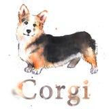 Waterverf hand-drawn helder-gekleurde Welse corgi Stock Foto