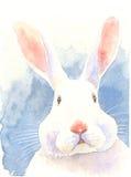 Waterverf het schilderen illustratie in verwarring gebracht konijntje Stock Foto