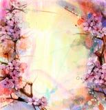 Waterverf het Schilderen Kersenbloesems, Japanse kers, Roze Sakura royalty-vrije illustratie