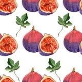 Waterverf het schilderen op witte achtergrond van fruitfig. Royalty-vrije Stock Foto's