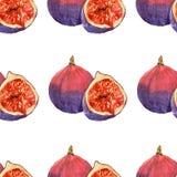 Waterverf het schilderen op witte achtergrond van fruitfig. Stock Fotografie