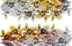 Waterverf het schilderen van boerenkinkelsbloemen Stock Afbeelding