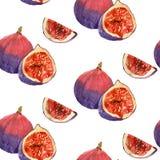 Waterverf het schilderen van fruitfig. Stock Foto