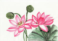 Waterverf het schilderen van lotusbloembloem Stock Afbeelding