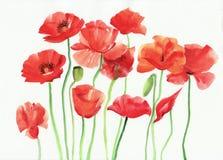 Waterverf het schilderen van rode papavers Royalty-vrije Stock Fotografie