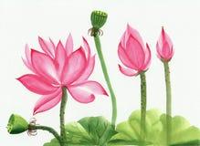 Waterverf het schilderen van roze lotusbloembloem Stock Afbeeldingen