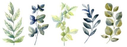 Waterverf met bosblad wordt geplaatst dat Gewassen tekeningillustratie stock foto