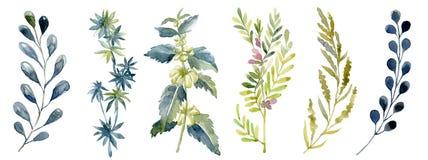 Waterverf met bosblad wordt geplaatst dat Gewassen tekeningillustratie stock fotografie