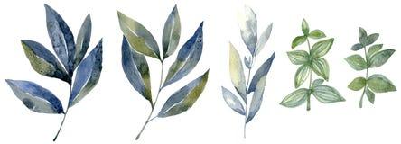 Waterverf met bosblad wordt geplaatst dat Gewassen tekeningillustratie stock foto's