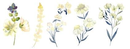Waterverf met bosblad wordt geplaatst dat Gewassen tekeningillustratie royalty-vrije stock foto's
