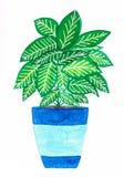 Waterverf met de hand gemaakte kleurrijke dieffenbachia in een blauwe pot stock illustratie