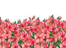 Waterverf met de hand geschilderde bloemenbanner in tropische stijl Stock Fotografie