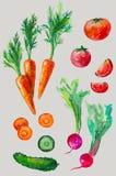 Waterverf met groenten wordt geplaatst die Stock Afbeeldingen