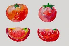 Waterverf met tomaten wordt geplaatst die Royalty-vrije Stock Afbeelding