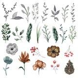 Waterverf met uitstekende bloemen en takjes wordt geplaatst dat vector illustratie