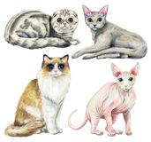 Waterverf met vier verschillende rassen van katten wordt geplaatst die stock illustratie