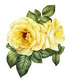Waterverf met witte rozen