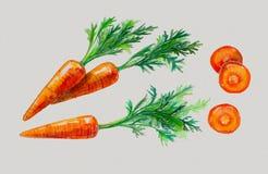 Waterverf met wortelen wordt geplaatst die Royalty-vrije Stock Afbeelding