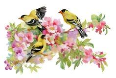 Waterverf mooie vogels die op bloeiende takken zitten royalty-vrije illustratie