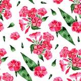 Waterverf naadloos patroon met floxbloem Hand getrokken uitstekende illustratie Royalty-vrije Stock Afbeeldingen