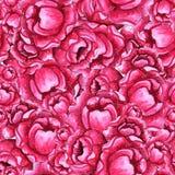 Waterverf naadloos patroon met roze pioenbloemen stock fotografie