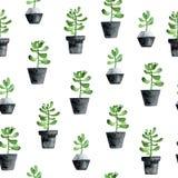 Waterverf naadloos patroon met succulents op witte achtergrond vector illustratie