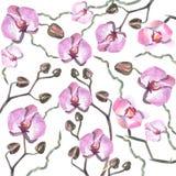 Waterverf orhid patroon royalty-vrije stock foto