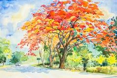 Waterverf origineel landschap die rode, oranje kleur van de boom van pauwbloemen schilderen Royalty-vrije Stock Foto's