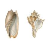 Waterverf overzeese shells Stock Foto's