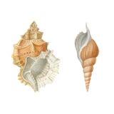 Waterverf overzeese shells Stock Fotografie