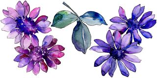 Waterverf purper Afrikaans madeliefje Bloemen botanische bloem Geïsoleerd illustratieelement stock foto