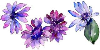 Waterverf purper Afrikaans madeliefje Bloemen botanische bloem Geïsoleerd illustratieelement stock foto's