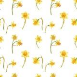 Waterverf realistisch bloemenpatroon met gele narcissen in de stijl van het land stock foto