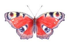 Waterverf rode vlinder Hand getrokken illustratie Royalty-vrije Stock Fotografie