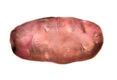 Waterverf roze aardappel Stock Afbeeldingen