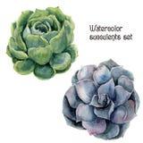 Waterverf succulente reeks De hand schilderde bloemenillustratie met groene en violette die cactus op witte achtergrond wordt geï stock illustratie