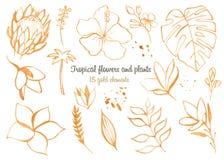 Waterverf tropische bladeren en bloemen royalty-vrije illustratie