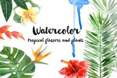 Waterverf tropische installaties royalty-vrije illustratie