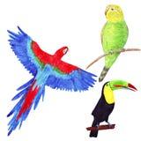 Waterverf tropische reeks met papegaaien en toekan stock illustratie