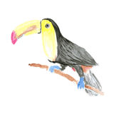 Waterverf tucan vogel in uitstekende stijl Royalty-vrije Stock Afbeeldingen