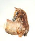 Waterverf van het kastanje de Arabische paard stock afbeeldingen