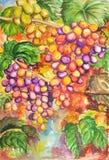 Waterverf van vruchten Stock Afbeelding