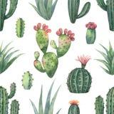 Waterverf vector naadloos patroon van cactussen en succulente die installaties op witte achtergrond worden geïsoleerd Royalty-vrije Stock Afbeeldingen