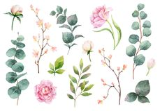Waterverf vectorhand het schilderen reeks pioenbloemen en groene bladeren stock illustratie