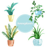 Waterverf vectorreeks houseplants Illustratie Stock Fotografie