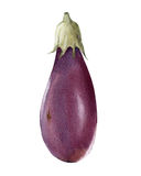 Waterverf verse aubergine Royalty-vrije Stock Foto's