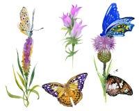 Waterverf wilde bloemen en vlinders geplaatst die op witte achtergrond worden geïsoleerd Royalty-vrije Stock Fotografie